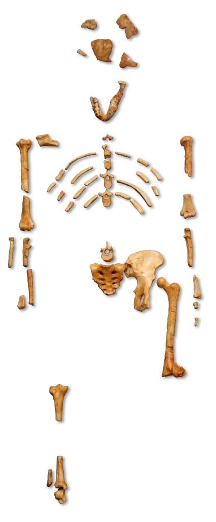 Qui étais tu avant d'être un tas d'ossements ?
