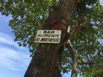 Les macaques, eux, ne mangent pas !